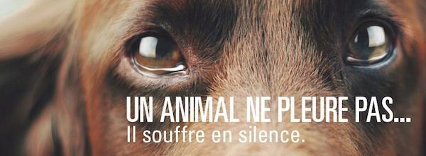 Pétitions pour la protection des animaux Un_animal_ne_pleure_pas_il_souffre_en_silence