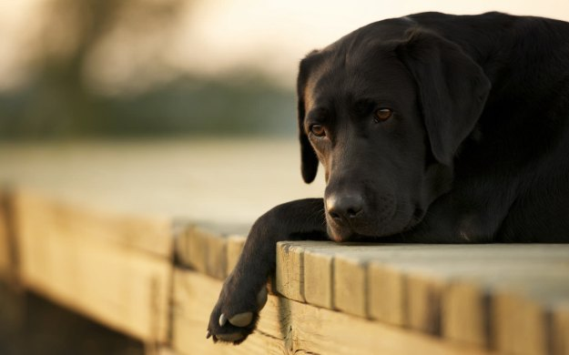 sad-dog-wallpaper-6875